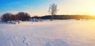 Frosty winter landscape with birch trees illuminated by the light of rising sun. royalty free stock photo