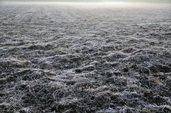 Field covered with hoar frost. A field covered with hoar frost on a chilly and foggy october morning royalty free stock photos