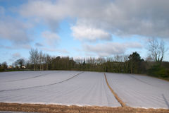 Field covered by polyethylen film Royalty Free Stock Photo