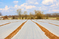 Field covered with polyethylene slick. On village farm Royalty Free Stock Photos