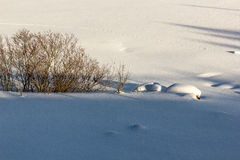 Field covered by snow, with bushes and traces of animals Royalty Free Stock Photography