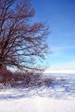 Field covered with snow, oak trees without leaves along, winter landscape, bright blue sky stock images