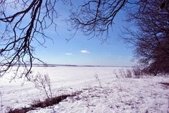 Field covered with snow, oak trees without leaves along, winter landscape, bright blue sky royalty free stock image