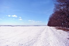 Field covered with snow, oak trees without leaves line along, winter landscape, bright blue sky royalty free stock photography