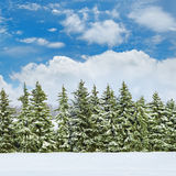 Field covered with snow and spruce Royalty Free Stock Photo