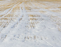 Field covered with snow Royalty Free Stock Photos