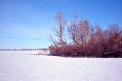 Field covered with snow, trees without leaves line on horizon, winter landscape, bright blue sky stock photo