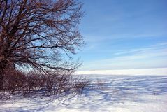 Field covered with snow, trees without leaves line on horizon, winter landscape, bright blue sky stock photography