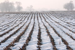 The field is covered by snow Stock Photos