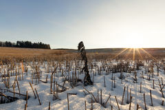 Field covered with snow Stock Photography