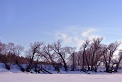 Field covered with snow, willow trees without leaves along, winter landscape, blue sky. Field covered with snow, willow trees without leaves along, winter royalty free stock images