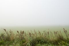 Looking over a misty field with high grass in the foreground. A field covered in thick fog with high grass in the foreground looking out Royalty Free Stock Photo