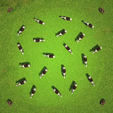 Field with cows top view 3D rendering. Field with cows top view. 3D rendering Stock Images