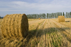 Field after crop. With reels of straw Stock Image