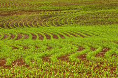 Field Crop Rows Curves Stock Images