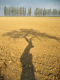 Field after crop with shadow of the tree Stock Photography