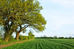 Field of Crops. Landscape View of a Field of Agricultural Crops in Spring Royalty Free Stock Photo