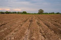 Field crops for cultivation royalty free stock image