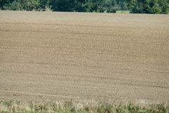 Field crops in late autumn Stock Photo