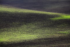 Field Crops Shapes and Colors Royalty Free Stock Image