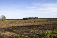 Field crops and trees Royalty Free Stock Images