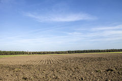 Field crops and trees Royalty Free Stock Photo
