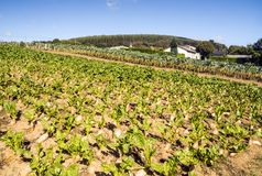 Field cultivated. In the north of Spain in a sunny day stock photos