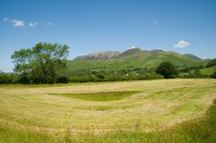 Field and cumbrian mountains Stock Photos