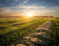 Field of cut grass Stock Photos
