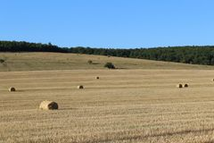 Field with cut grass and hay bales rolled.  stock image