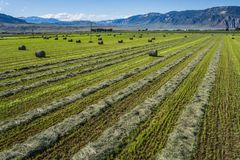 Field of Cut Hay in American West Royalty Free Stock Photography
