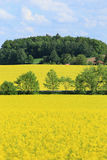 The Field d'orge verte et de colza jaune Photos stock
