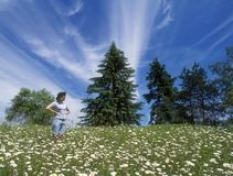 Field of daisies. Woman standing in field of daisies Royalty Free Stock Photography