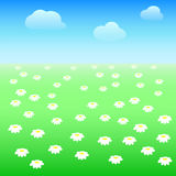 Field with daisies. A field of daisies and blue sky Stock Photography