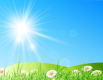 Field of daisies with bright sun. Vector illustration of field of daisies with bright sun Royalty Free Stock Photo
