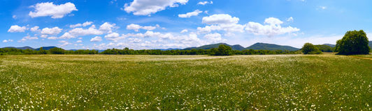 The field of daisies at the foot of the mountains on a Sunny day. Royalty Free Stock Photos