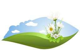 The field of daisies. Illustration field with chamomile flowers against the sky Stock Photography