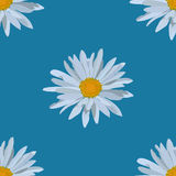Field of daisies. seamless pattern. Field of beautiful daisies. seamless pattern Stock Photography