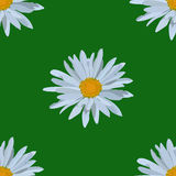 Field of daisies. seamless pattern. Field of beautiful daisies. seamless pattern Stock Image