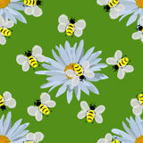 Field of daisies. seamless pattern. Field of beautiful daisies and bees. seamless pattern Stock Photography