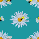 Field of daisies. seamless pattern. Field of beautiful daisies and bees. seamless pattern Royalty Free Stock Image