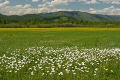 The field of daisies on a Sunny day. Stock Images