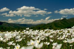 The field of daisies on a Sunny day. Stock Photo