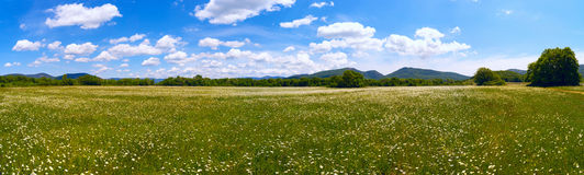 The field of daisies on a Sunny day. Panorama . Royalty Free Stock Photo