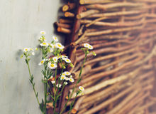 Field daisies on the wicker fence background Stock Images