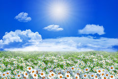 Field of daisy flowers and clouds on the clear blue sky Stock Photos