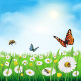 Field of daisy flowers. Spring flowers in a meadow. Vector illustration Stock Images