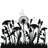 Field of dandelion flowers. Black silhouettes of summer plants on a white background. The outline of a glade with. Dandelions and flying birds. Illustration for Stock Images