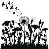 Field of dandelion flowers. Black silhouettes of summer plants on a white background. The outline of a glade with. Dandelions and flying birds. Illustration for Royalty Free Stock Image