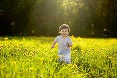 Field of dandelions Royalty Free Stock Image